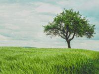 Wirtschaftssysteme: Herausforderungen Digitalisierung, Globalisierung und Klima