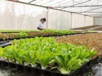 Klimawandel und Energiewende – Ressourcenschonung mit Indoor-Farming