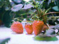 Zukunft der Indoor-Landwirtschaft